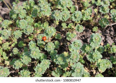 Ladybird on bush