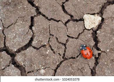 Ladybird on dry ground