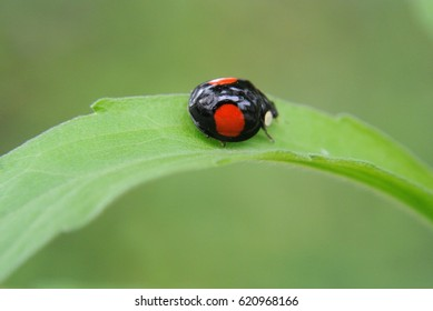 ladybug clinging to some grass.