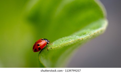 Ladybug in the green