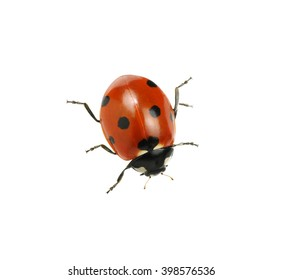 Ladybug isolated on white background