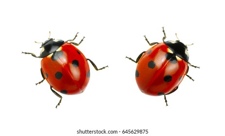 Ladybug Images, Stock Photos & Vectors