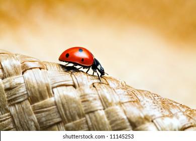ladybug macro crawling on a woven hat