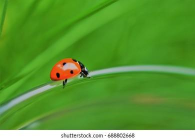 Ladybug on branch green grass