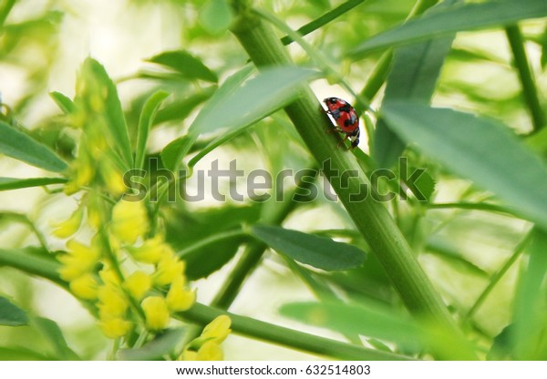 a ladybug on green leaf