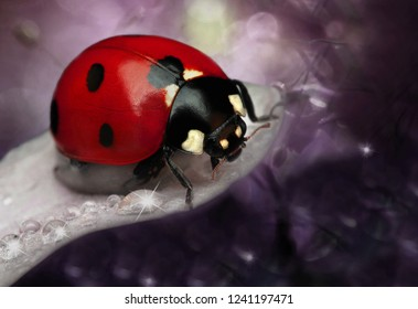 Ladybug on green leaf defocused background