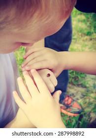 Ladybug on human finger hand. Closeup of child kid looking at ladybird.