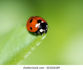 Ladybug on a leaf. Beautiful nature
