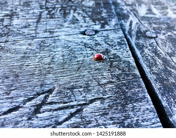 Ladybug on wood of a gazebo in a saw in the south of Brazil