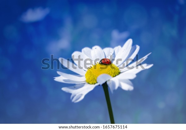 Ladybug sitzt auf weißem Hintergrund
