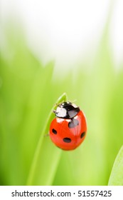 ladybug sitting on the blade of grass