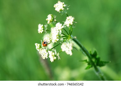 A ladybug is sitting on a flower in the middle of a green meadow.