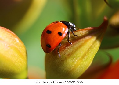 Ladybug is sitting on a yellow flower with green backround
