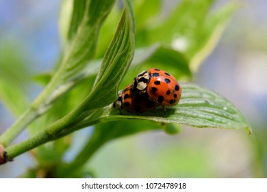 Ladybug in spring on a branch