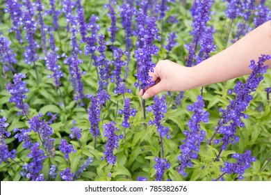 Lady's hand is touching purple flower during summer time.