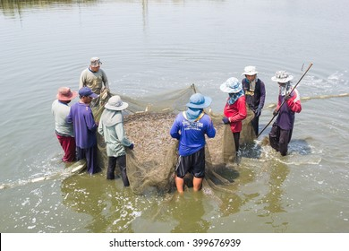 LAEMSING , CHANTHABURI THAILAND - February 18, 2016 : Worker use a fishing net for dragging the shrimp in the pond