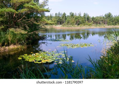 Laesoe / Denmark: View over the dreamy swimming pond with water lilies in the woods near Byrum