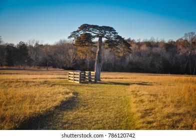 Lafayette Meeks Grave - Appomattox Court House National Historical Park