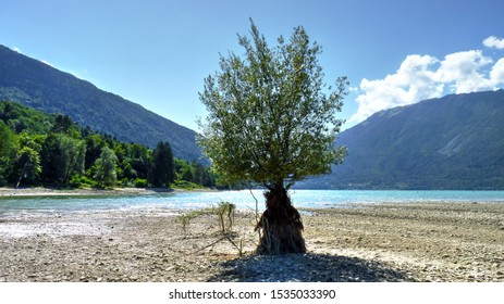 Lago di Santa Croce, Italy - low water, isolated tree