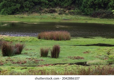 Lagoa do Negro, Terceira island, Azores
