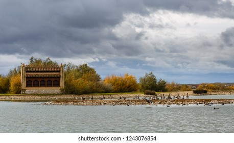 Lagoon with common geese, other ducks and bird observatory. Natural Reserve of Lagunas de Villafafila, Zamora, Spain.