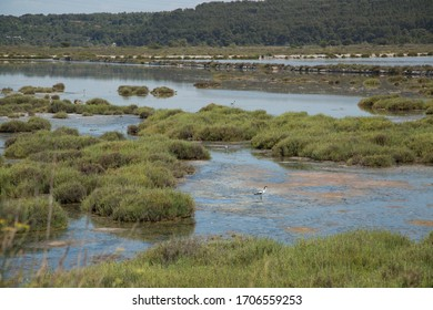Lagoon with green hummocks and clean blue water, Rhone delta in Camargue region natural park. France, 2018.