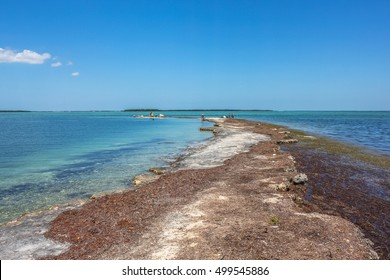 The lagoon landscape of the little visited No Name Key, an island located in the lower Florida Keys in the United States, close to the best known Big Pine Key. No Name Key is famous for the Key Deer.