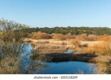 Lagoon park of Pateira de Fermentelos,Portugal.