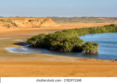 The lagoon of punta gallinas and mangroves in the desert
