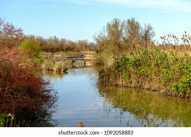 lagoon view with wooden bridge of broadwalk, shot in bright spring sun light at nature oasis, Cannavie, Volano, Ferrara,  Italy