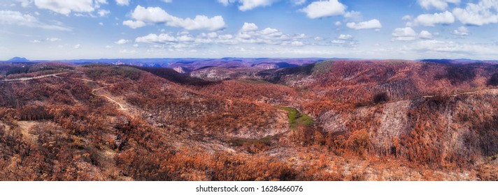 Lagre burnt areas of gum tree woods in Blue Mountains of Australia after devastating bushfires. Wide aerial panorama over canyon and brown tree canopies.