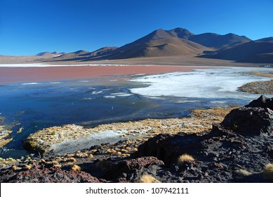 laguna colorada in bolivian desert with red copper seaLaguna Colorada
