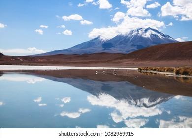 Laguna with flamingos - Nor Lipez province, Bolivia