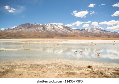 Laguna Hedionda is a saline lake in the Nor Lípez Province, Potosí Department in Bolivia. It is notable for various migratory species of pink and white flamingos
