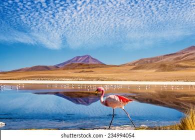 "Laguna auf der ""Ruta de las Joyas altoandinas"" in Bolivien mit rosafarbenem Flamingo durch die Szene"