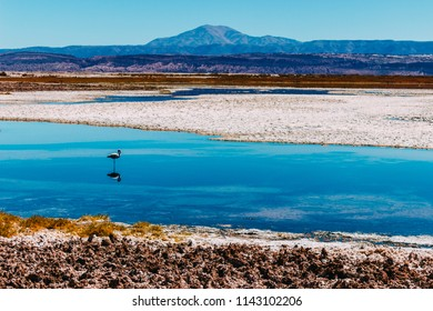 Laguna Tebinquinche Hd Stock Images Shutterstock