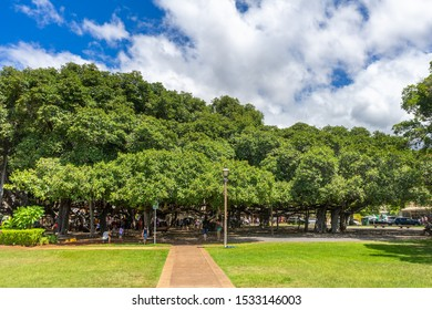Lahaina, HI / USA – September 27, 2019: A view of Banyan Tree located in the town of Lahaina, Hawaii on the island of Maui.