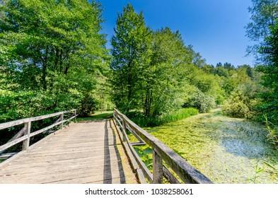 Lahinja river  natural park, Bela Krajina (White Carniola) region in Slovenia, Europe. - Shutterstock ID 1038258061
