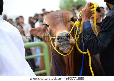 Lahore PAKISTAN 29 August People Buying Stock Photo (Edit