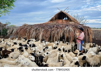 Laipori village, Waingapu, East Sumba, East Nusa Tenggara, Indonesia - November 2017 : the shepherd with his herd in a simple shed from bamboo and dried grass