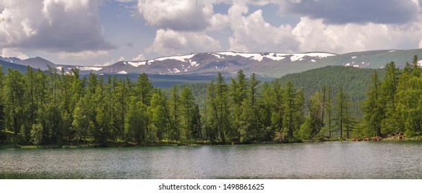 Lake in the Altai mountains on a background of a snowy ridge