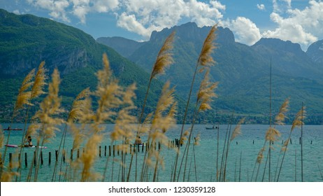 Lake around alpine mountains