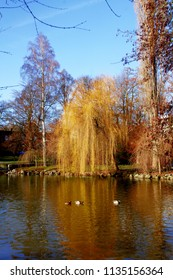 a lake in autumn on a sunny day