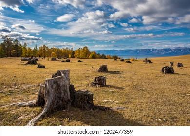 lake, Baikal, tree stumps, deforestation