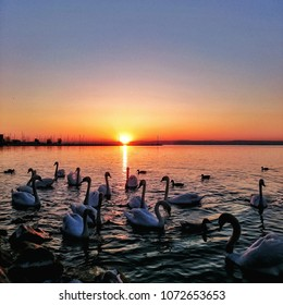 lake balaton sunset with swans