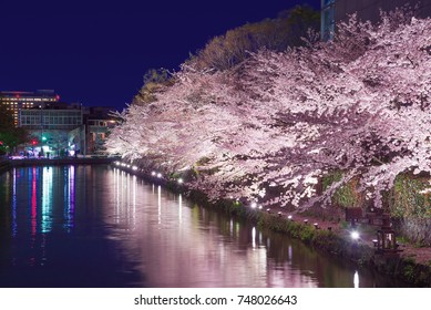 Lake Biwa Canal  with cherry blossoms lit up at night in Okazaki district, Kyoto, Japan.