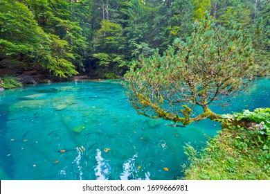 Lake Blausee in Bernese Highlands at summer, Switzerland
