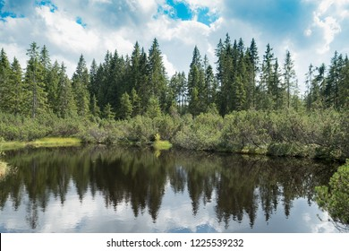 Lake in Bohemian forest
