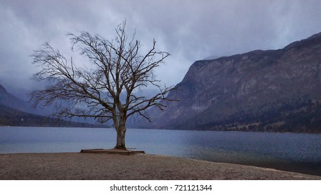 Lake Bohinj - Shutterstock ID 721121344
