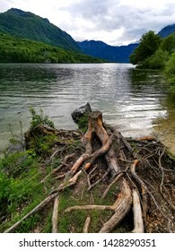 lake bohinj in slovenia national park